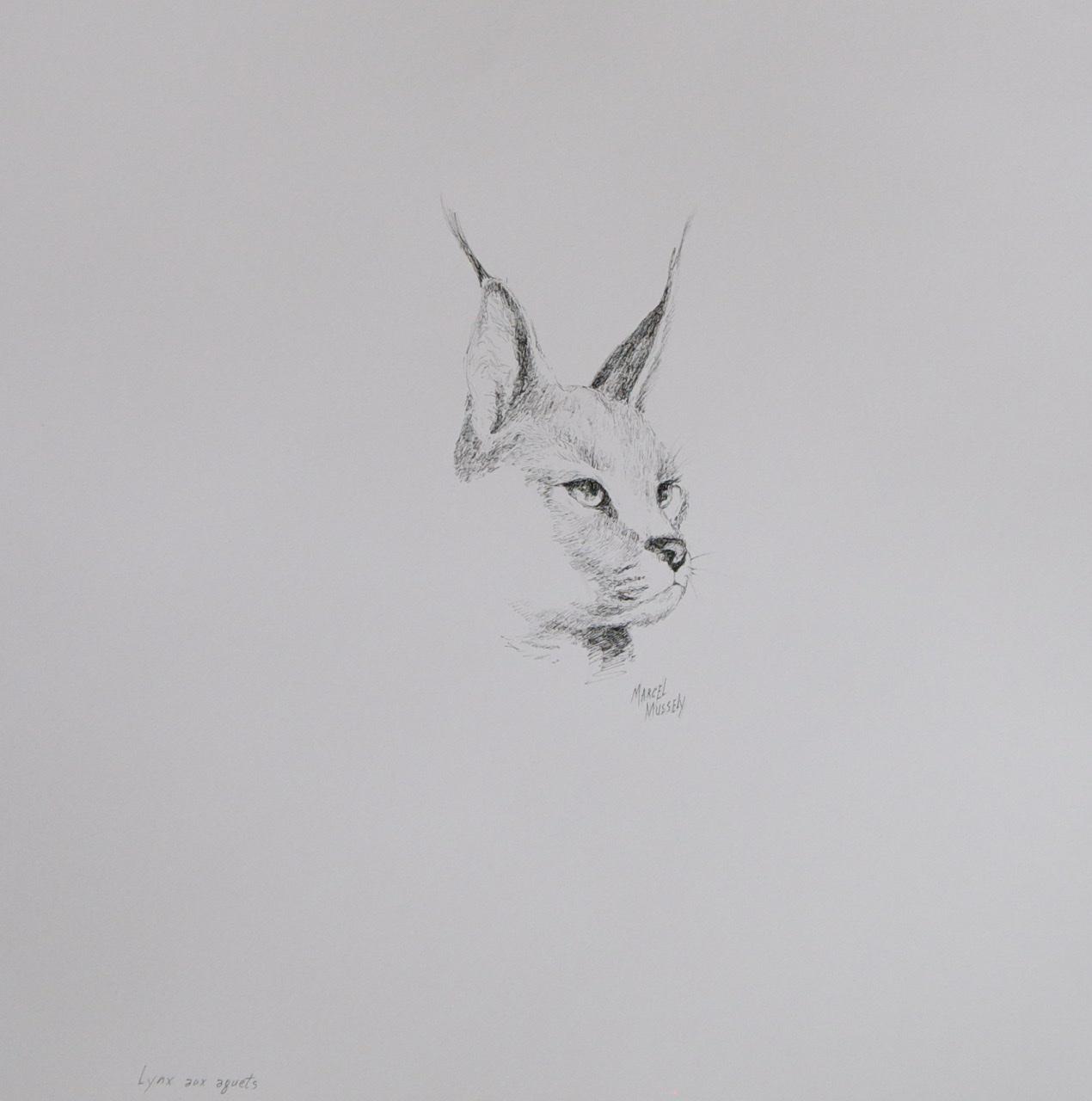 """<span style=""""color: #ff0000;""""><a style=""""color: #ff0000;"""" href=""""mailto:mussely@sympatico.ca?subject=Défi 15 dessins 15 semaines -  Lynx aux aguets"""">Contacter l'artiste</a></span> Marcel Mussely -  Lynx aux aguets  - collection personnelle - encre sur papier aquarelle - 24x18 po"""